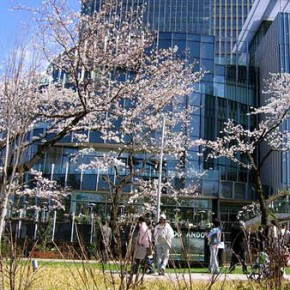 Pictures from Tokyo Midtown