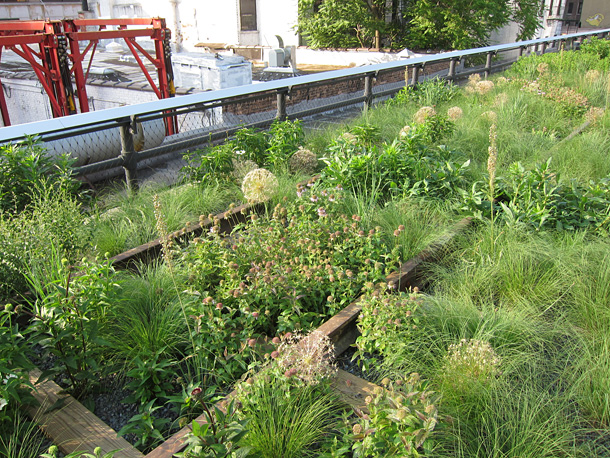 Plants among the former tracks at the Highline