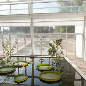 The enlargement project of the Botanical Garden of Padua